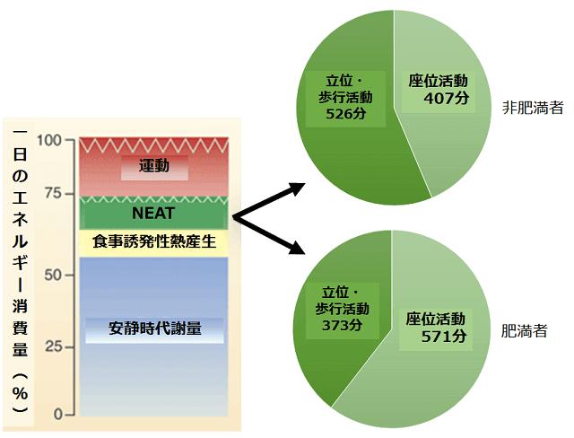 非運動性熱産生(NEAT)とは | 健康長寿ネット