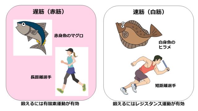 筋肉の種類とその特徴 健康長寿ネット