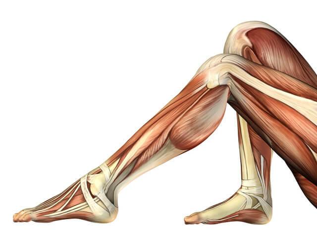「筋肉 人体」の画像検索結果